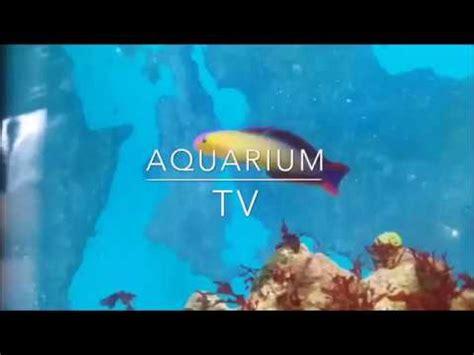 fische ins aquarium einsetzen fische ins aquarium einsetzen ich habe neue fische
