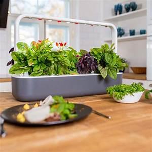 clickgrow smart garden 9 pocketmedia ag With katzennetz balkon mit smart indoor garden