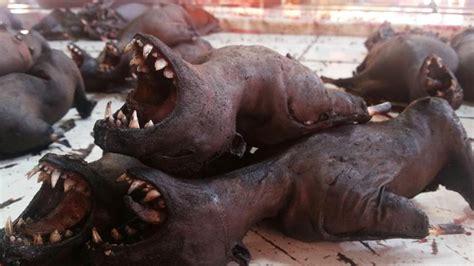 pasar tomohon  langowan sulut tempat kuliner daging