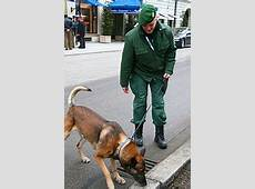 Hundeführer – Wikipedia