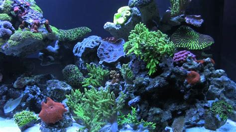 Colorful Coral Reef Tank Youtube