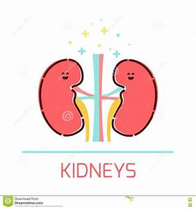 Related Keywords & Suggestions for kidney cartoon