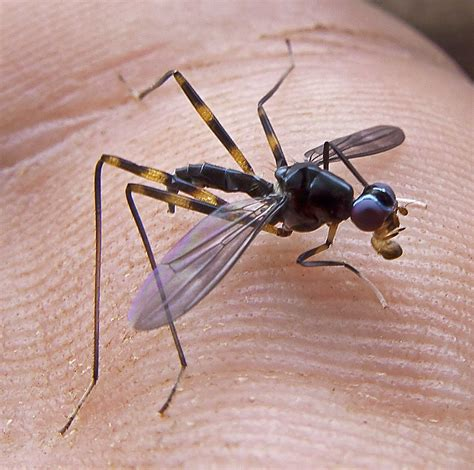 Madang Ples Bilong Mi Blog Archive Mystery Insect