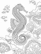 Coloring Seahorse Pages Sea Under Ocean Adult Adults Zentangle Pdf Printable Therapy Animal Sheets Mandala Colouring Animals Fish Drawings Drawing sketch template
