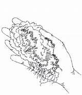 Moss Milkshake Drawing Getdrawings Garden Choice sketch template
