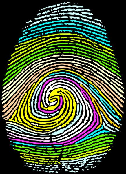 fingerprint  vector    vector