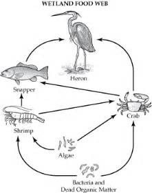 great common factor worksheet this portrays a common wetland food web you can see the smallest organism is bacteria which is