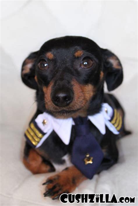 cushzilla captain kitty pilot uniform  cats  dogs
