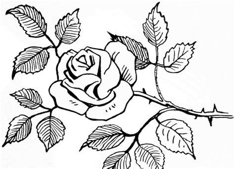cara mewarnai bunga kembang sepatu 20 sketsa gambar