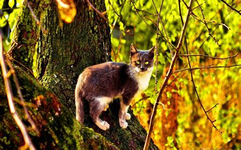 hd wild cat   woods wallpaper