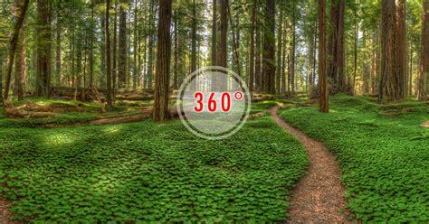 California Coastal Redwoods-3D Panorama