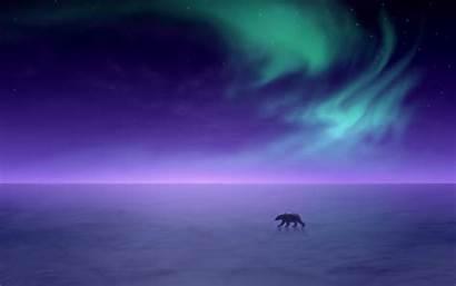 Aurora Borealis Polar Bear Night Winter Visualizzarlo