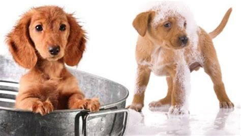 devenir toiletteuse pour chien 28 images devenir toiletteur d animaux fiche m 233 tier