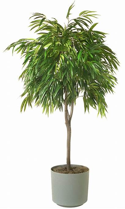 Plants Low Indoor Houseplant Trees Plant Houseplants