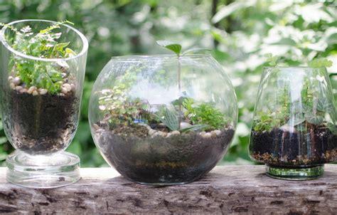gorgeous diy terrariums jenni raincloud