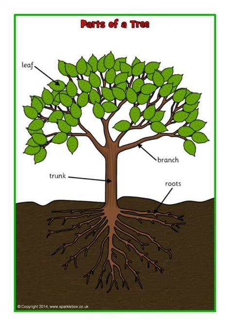parts   tree posterworksheet sb sparklebox