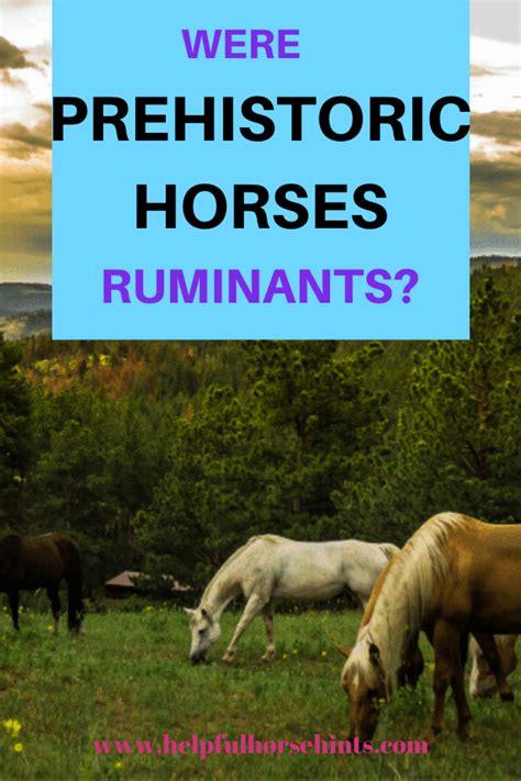 horses ruminants they helpfulhorsehints