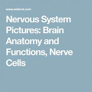 Slideshow  Visual Guide To Your Nervous System