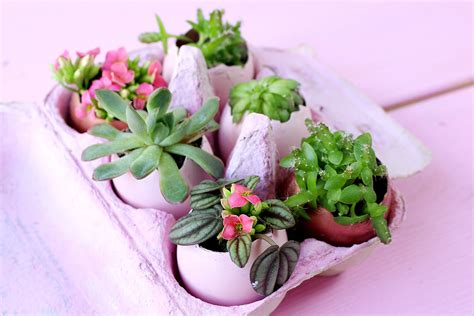 deko ostern selber machen diy oster deko ostereier mit sukkulenten bepflanzen