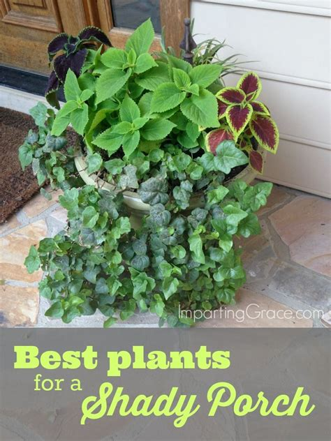best potted plants for shade the best plants to grow on a shady porch impartinggrace com 10 creative christian mom