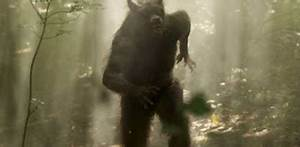 Bigfoot Evidence: Sightings Map Of Pennsylvania Dogman Is ...