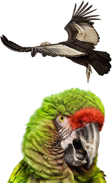 bird beautiful photography  andrew zuckerman daily