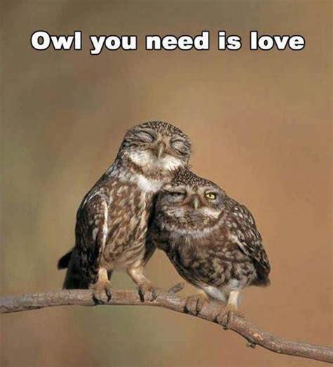 Funny Owl Meme - image gallery owl jokes