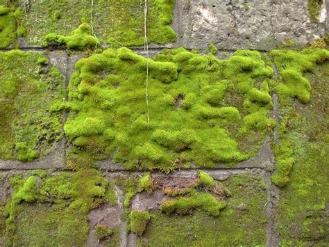 Images Of Moss Free Photo Moss Wall Green Rock Texture Free Image