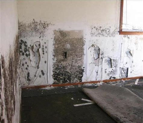 Water Damage, Fire Damage, Mold Restoration Services. Chicago Conference Center Las Vegas Body Shop. Marketing To Small Businesses B2b. Low Intrest Rate Credit Card. Cheapest Car Insurance In New York. Humana Medicare Provider Phone Number. Business Email Template Alex Hanna In Hialeah. Life Insurance 1 Million Identity Theft Sites. University Of Miami Human Resources