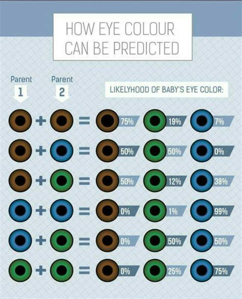 baby eye color calculator 17 best ideas about eye color predictor on