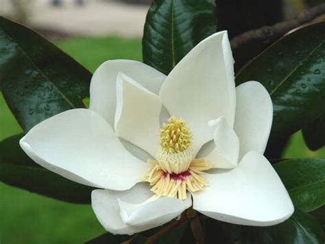 beautiful magnolia flower tree animal photo