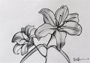 Pencil Drawing Of A Flower Easy Flower Pencil Drawing ...