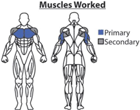 pec deck flyes target muscles narrow grip bench press chest workout routines