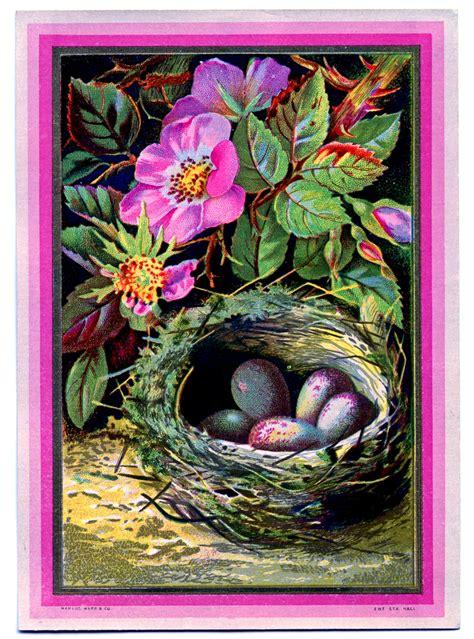 vintage clip art nest  eggs  pink roses
