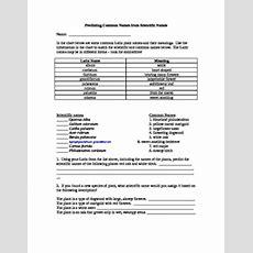 Binomial Nomenclature Worksheet By Erin Evan Biology Tpt