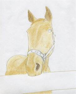 How To Draw Horse Head ~ Mulberry