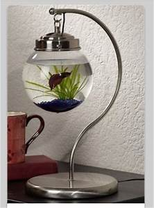 10 Best images about Fish bowls for Norman:) on Pinterest ...