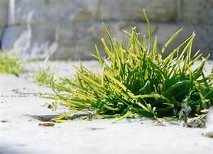 Comment Enlever Les Mauvaises Herbes : limiter l 39 invasion des mauvaises herbes au jardin ~ Melissatoandfro.com Idées de Décoration