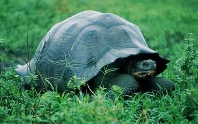 Turtle Wallpapers Turtles Backgrounds Animals Desktop Background