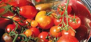 Tomaten Selber Anbauen : tomaten tipps s en pflanzen pflegen ernten waschb r ~ Orissabook.com Haus und Dekorationen