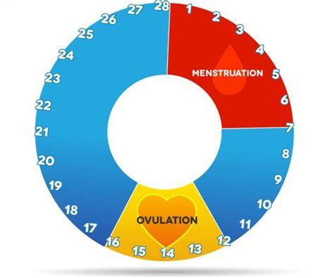 Rahim Wanita Yang Dalam Fase Dan Siklus Menstruasi Pada Wanita