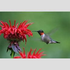 Top 10 Flowers That Attract Hummingbirds To Your Yard