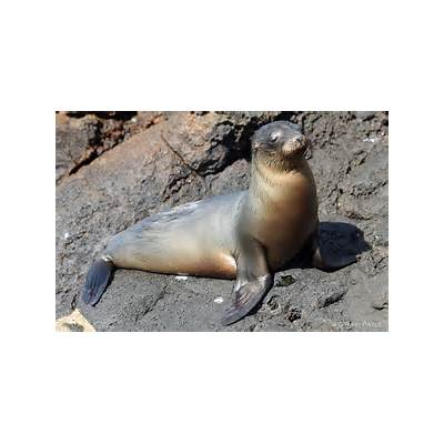 sea lionsPhotos by Ravi