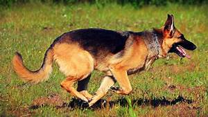 Most 10 Beautiful Running Animals New Hd Wallpapers 2014