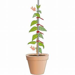 Winterharte Kübelpflanzen Hochstamm : hochst mmchen selber ziehen so gelingt 39 s mein sch ner ~ Michelbontemps.com Haus und Dekorationen