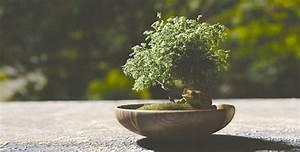 Pflege Von Bonsai Bäumchen : bonsai pflege f r anf nger blog floraqueen deutschland ~ Sanjose-hotels-ca.com Haus und Dekorationen