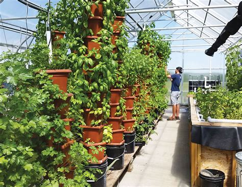Vertical Garden Aquaponics by Why Aquaponics Is An Amazingly Sustainable Way To Put Food