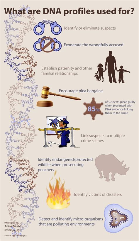 infographic   dna profiles   scibraai