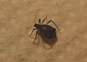 Kleine Schwarze Käfer Im Haus : k fer am weihnachtsbaum kraut r ben forum ~ Lizthompson.info Haus und Dekorationen