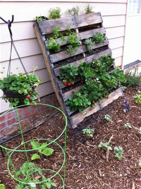vertical pallet garden diy vertical pallet vegetable garden 99 pallets